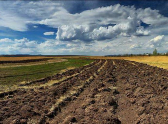 Новий закон про обіг землі може призвести до розбазарювання земель і дешевого продажу їх іноземцям
